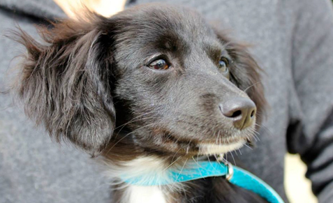 Adopt A Dog in San Diego, Find Rescues and Soi Dogs | The